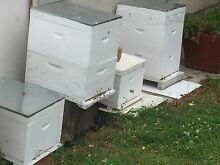 Beehives for sale East Maitland Maitland Area Preview