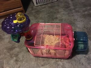 Fancy mouse and cage for sale