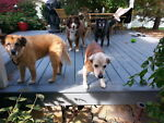 wendysavesdogs