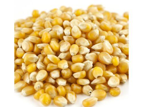 Reist Hi Pop 5 lb MUSHROOM POPCORN Unpopped BULK Kernals For Kettle Corn Snack