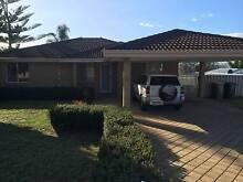 4 bed 2 bath plus study home in Parmelia $350 pw Parmelia Kwinana Area Preview