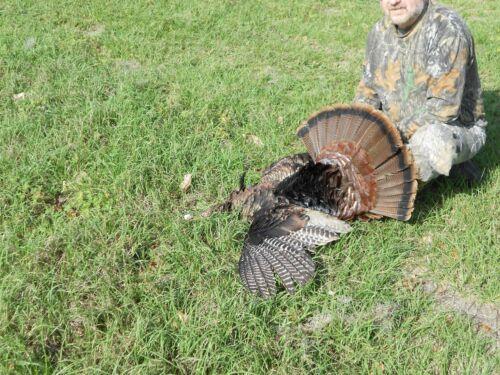 2021 Spring Osceola Turkey Hunts