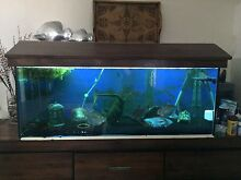 4ft fish tank Caboolture Caboolture Area Preview