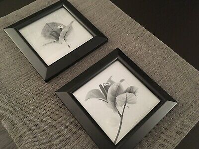 Pair of Black and White Macro Photography Flowers, Nature Botanical, Gray Decor