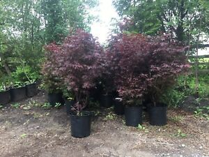 Tree Nursery located just outside Peterborough! Amazing deals!