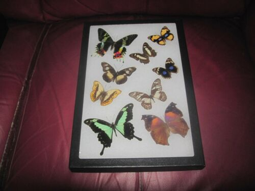 """9 real mounted butterflies framed 8x12"""" riker  mount collection #8x12-23"""