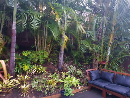 Palms and Bromeliads for sale