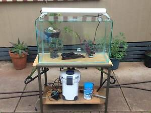 2.5ft Tropical Aquarium on stand with everything. Dover Gardens Marion Area Preview