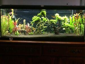 Aquarium 55 galons NOUVEAU PRIX!!