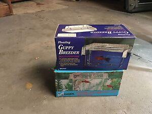 Floating Guppy Breeder  London Ontario image 2