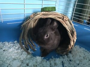 Rabbit and accessories for sale