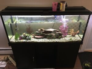 55 Gallon fish tank with or without fish 400$ OBO