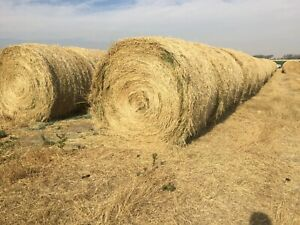 Grass Hay Rounds-Lethbridge Area