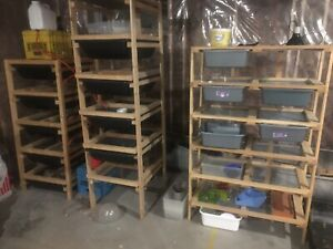 Rat breeding set up