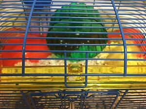 Two hamsters with the cage for only 55 dollars