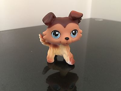 Littlest Pet Shop Collie   58 Lps Sage Blue Eyes Usa Seller