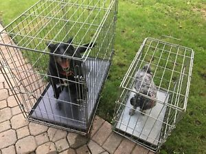 Large and small collapsible crate cage