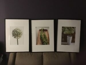 Set of 3 Pictures in frames