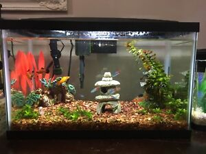 10 gallon aqueon aquarium all inclusive