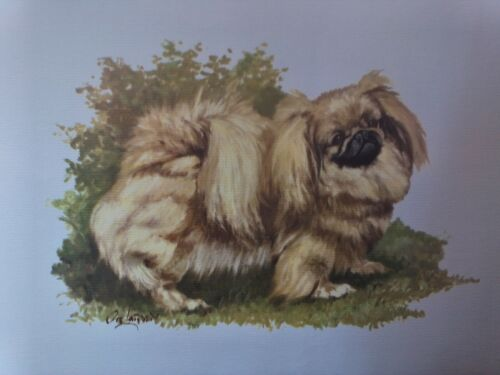 Pekinese Dog Breed Lithograph Collectable Art Print by Ole Larsen 1950