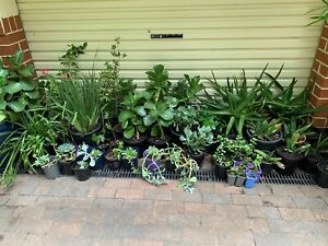 Wide range of locally grown plants from $2  to  $25 Ainslie North Canberra Preview