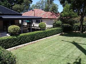 Lawn Mowing, hedge trimming and Gutter Cleaning North Ryde Ryde Area Preview