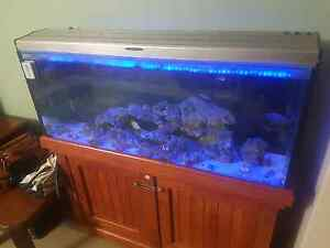 4ft Marine Aquarium Woodvale Joondalup Area Preview