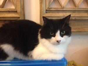 Cat sitter wanted Fairfield Darebin Area Preview