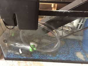 30 Gallon Aquarium  Set Up Kitchener / Waterloo Kitchener Area image 3