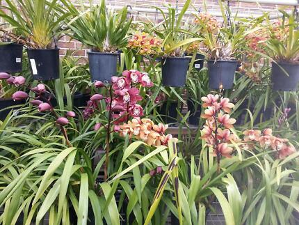 orchids/plants garage sale Tarneit Wyndham Area Preview