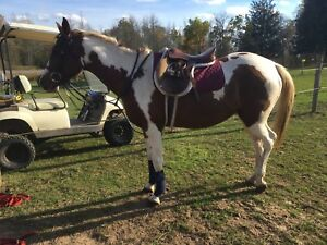 8 Year old Quarter horse mare