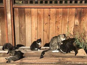 5 intelligent charming farm kittens