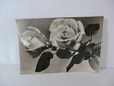 Karte Schwarz Und Weiß (DDR Postkarte schwarz-weiß Echt Foto Jesora Karl-Marx-Stadt Bild und Heimat )