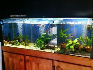 4ft Aquarium & Cabinet Package