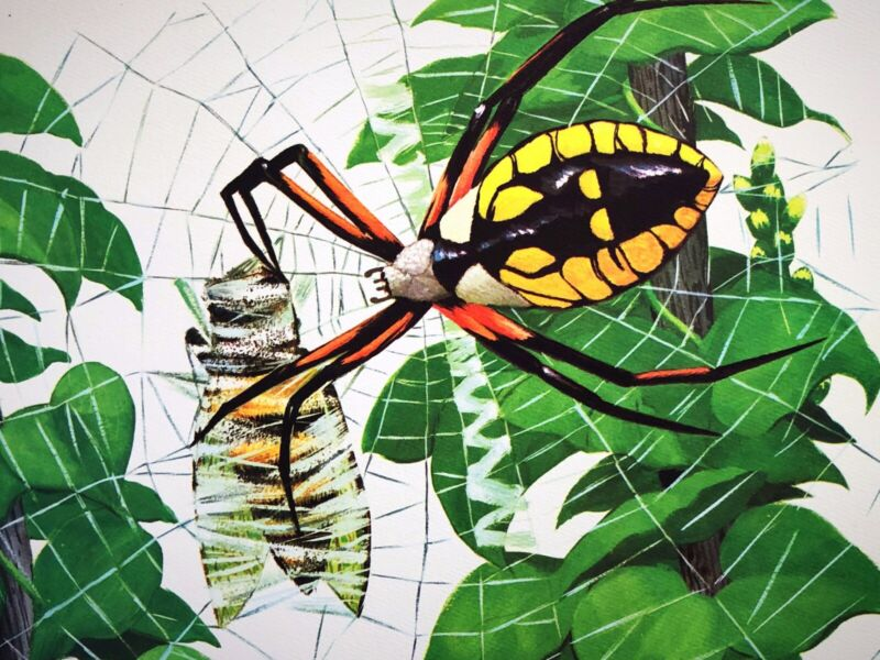 Vintage Argiope Spider Lithograph 60s Educational School Poster David Cook