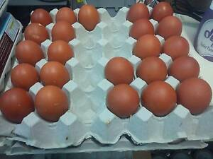 Fertile French Wheaton Maran Hatching Eggs Tullamarine Hume Area Preview