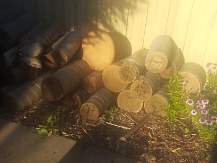 Free tree stump/trunk from palm tree