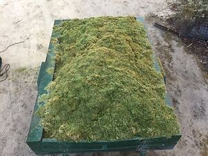 "Use as "" Mulch or Compost "" Free Lawn Clippings, with Free Delivery!! Gnangara Wanneroo Area Preview"