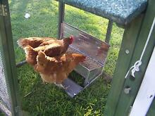 CHICKEN FEEDER Somerzby automatic rat proof treadle feeder Somersby Gosford Area Preview