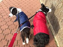 Archie's Path GPS Dog Walking Oakden Port Adelaide Area Preview