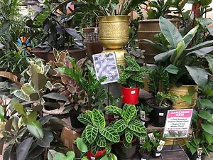 Looking for Plants? Visit The Plant Shack! Deception Bay Caboolture Area Preview