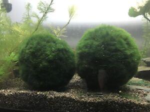 Différente plantes d'aquarium
