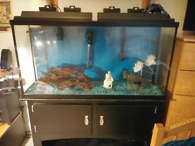 50 gallon fresh water fish tank with stand and everything with it