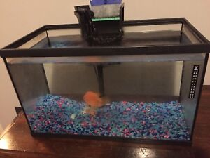 10 gallons aquarium for sale