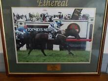 Melbourne Cup Winner ETHEREAL Terrigal Gosford Area Preview