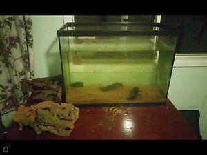 Axolotls Christies Beach Morphett Vale Area Preview
