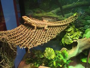 Bearded dragon 126.8 gallon tank sliding doors