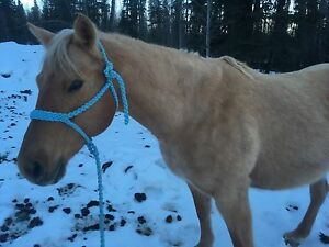 13 year old palomino mare for sale