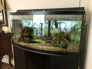 72-Gallon Bow Tank with Stand and 100-Gallon Filter