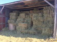 Hay for Sale. Small Squares and Rounds Bridport Dorset Area Preview